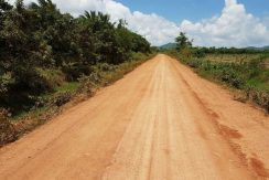 Land with many big mango in Dang Tong Kampot for sale (2)