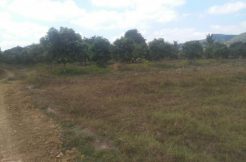 Land with many big mango in Dang Tong Kampot for sale